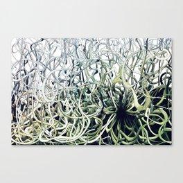 Dis Green Canvas Print