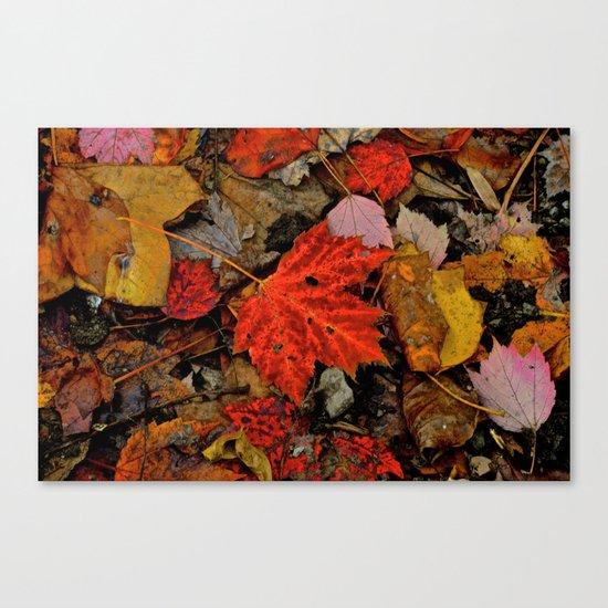 Nature's Palette Canvas Print