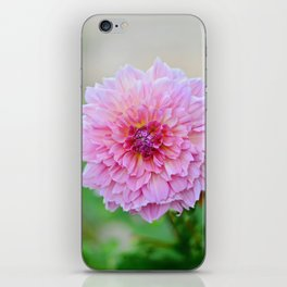 Dahlia Decadence iPhone Skin