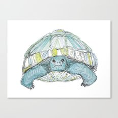 Turquoise Tortoise Illustration Canvas Print