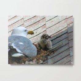 Baby Seagull (1) Metal Print