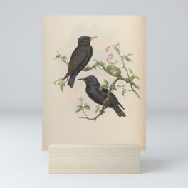 Sardinian Starling2 Mini Art Print
