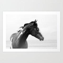 overo horse Art Print