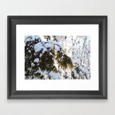 Snowy Cedar Framed Art Print