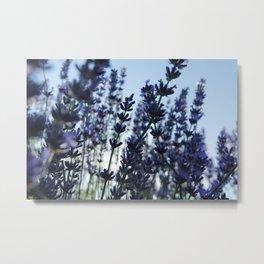 lavanda Metal Print