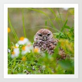 Owl in Flowers Art Print