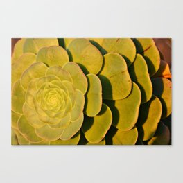 Plant | Nature | Tenerife | Spain Canvas Print
