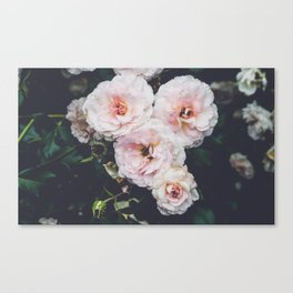pink. Canvas Print