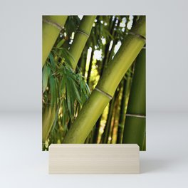 Green Bamboo by Reay of Light Mini Art Print