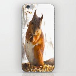 Mommy Squirrel  iPhone Skin