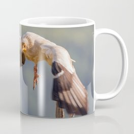 Egyptian Vulture in flight Coffee Mug