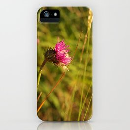 Carduus acanthoides plant, Dolomiti mountains, Italy II iPhone Case