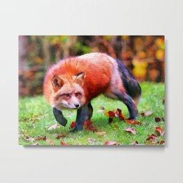 Autumn Fox hunting Metal Print