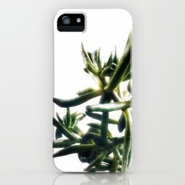 Jade - money plant - succulent in bright light iPhone Case