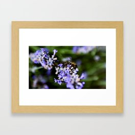 Bee on lavander Framed Art Print