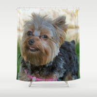 yorkie Shower Curtains featuring Little Yorkie by IowaShots