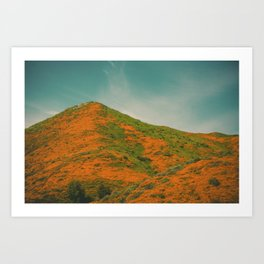 California Poppies 029 Art Print