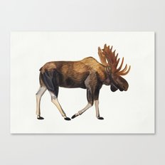 Watercolour Moose Drawing Canvas Print