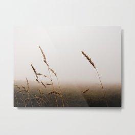 Grasses in the Mist Metal Print