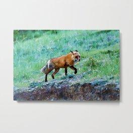 Yukon Wildlife  - Red Fox Metal Print