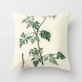 Poison parsley (Aethusa cynapium)  from Medical Botany (1836) by John Stephenson and James Morss Chu Throw Pillow