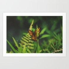 Butterfly, Bali Art Print