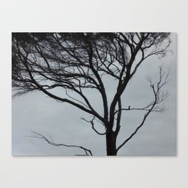 Gnarly Wind Swept Tree Canvas Print