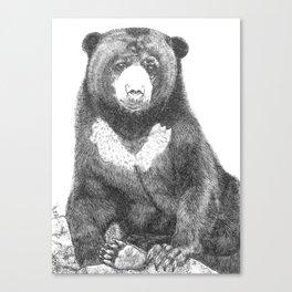 Malayan Sun Bear (Beruang Madu) Canvas Print