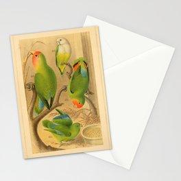 psittacus rosicollis Red headed Lovebird Green rumped Parrotlet Grey headed Lovebird8 Stationery Cards