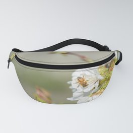 Bee laid on white flowers of a cherry tree Fanny Pack