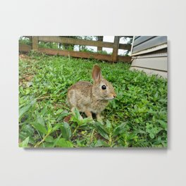 Baby Bunny in Grass Metal Print