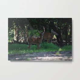 Fawn in the Forest Metal Print