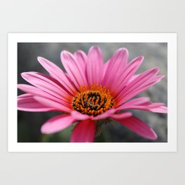 Something Pretty Art Print