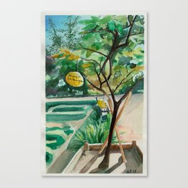 Washingtons Pomelos Canvas Print
