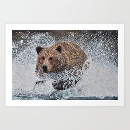 Grizzly Bear Running in the Water Art Print