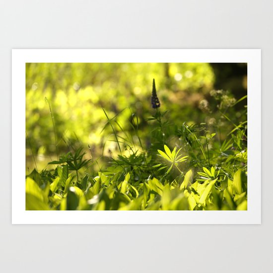 In The Summer Forest  Art Print