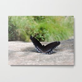 Butterfly on Rock Metal Print