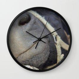 Hey!  Excuse me!  I'd like some attention over here! color funny horse photography / photographs Wall Clock