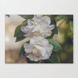 Romantic White Vintage Flowers, Nature Prints, Flower Photography Canvas Print