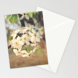 Pear Tree Blossoms Stationery Cards