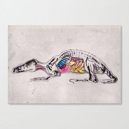 Anatomy of a Beast Canvas Print