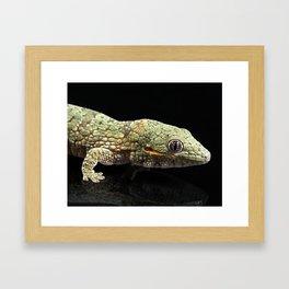 Eurydactylodes agricolae Gecko Framed Art Print