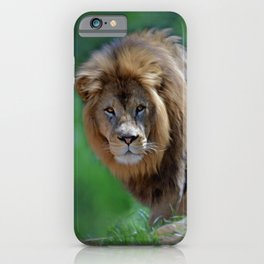 The Young Lion iPhone Case