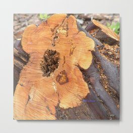TEXTURES - Manzanita in Drought Conditions #2 Metal Print