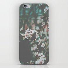 Spring time. iPhone & iPod Skin
