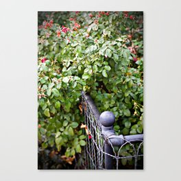 Bloom Canvas Print