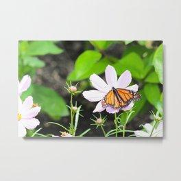 Butterfly Exhibit Metal Print