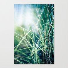 Angel Grass Canvas Print