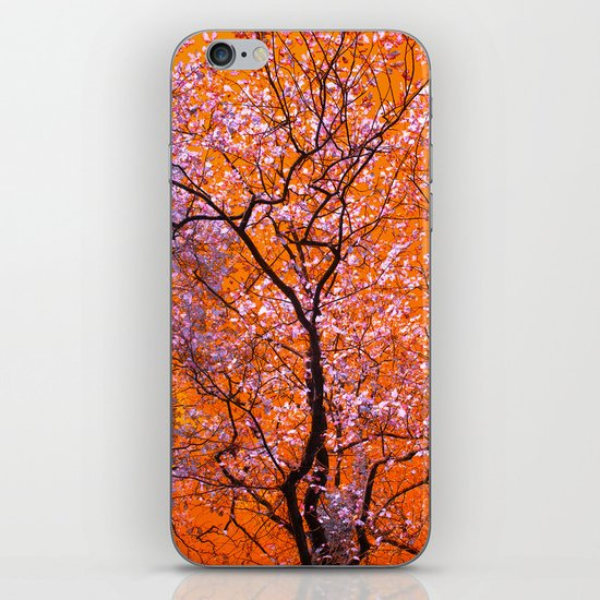 autumn tree IX iPhone & iPod Skin