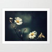 daisy Art Prints featuring Daisy by Pascal Deckarm Fine Art